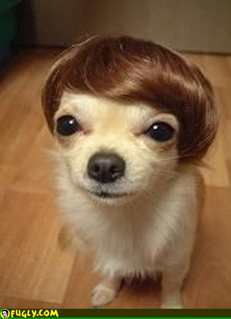 dog-wig
