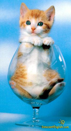 cute-kittens-pic51