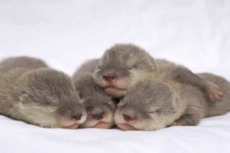 cute_otters