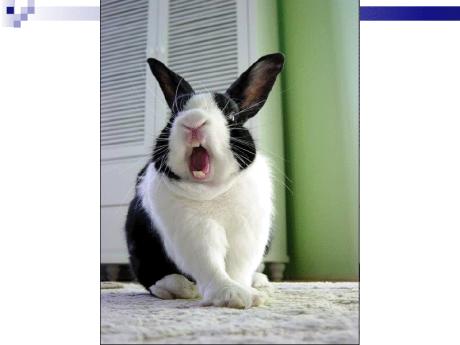 BunnyYawn