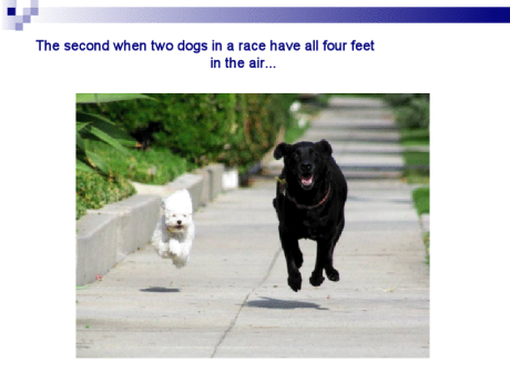 DogRace