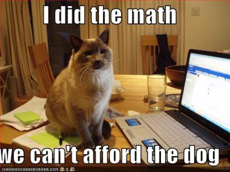 funny-pictures-cat-did-the-math-and-you-cannot-afford-the-dog