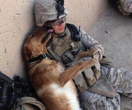 dog and soldier