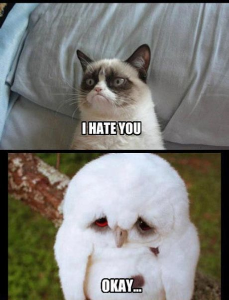 grumpy-cat-hates-owl-1331