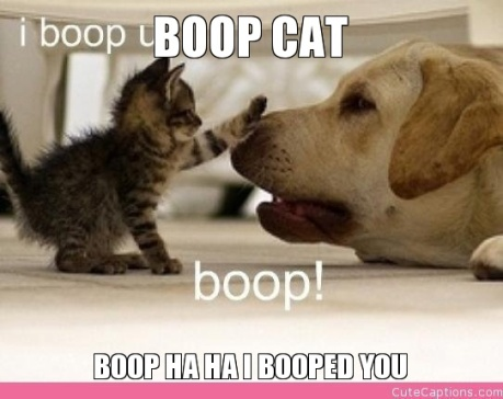 boop-cat-boop-ha-ha-i-booped-you
