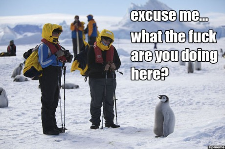 excuse-me-what-the-fuck-are-you-doing-here-penguin-meme