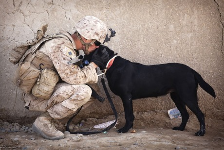 soldier and dog4