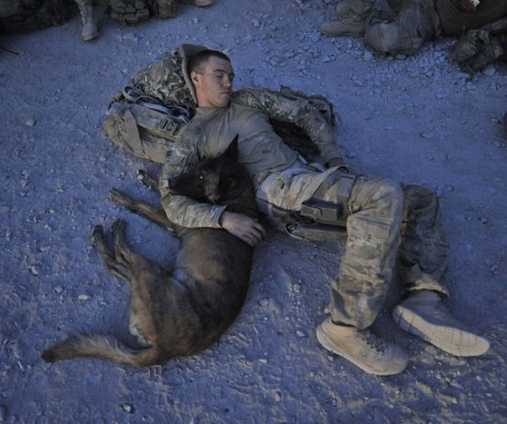 soldier and dog5