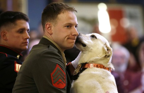 soldier and dog6