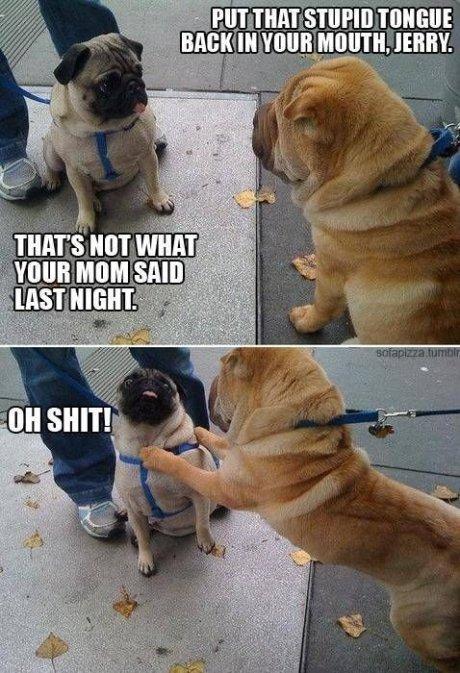 Bad Pupster!