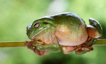 frog859d9f2_b
