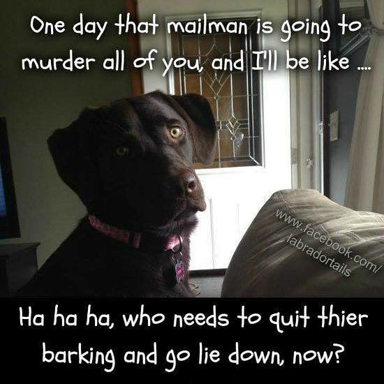 quit barking
