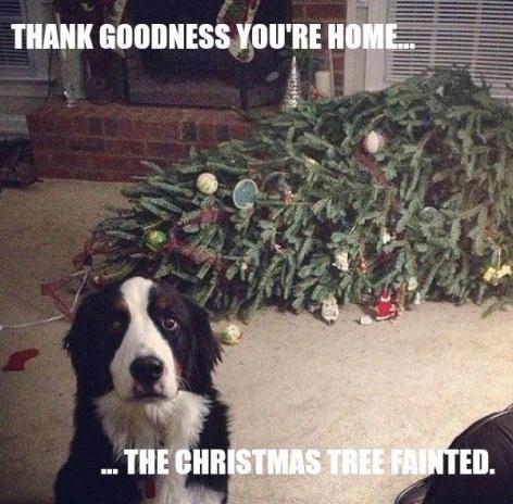 vcgbx-dog-tree-funny
