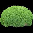 bush_png7205