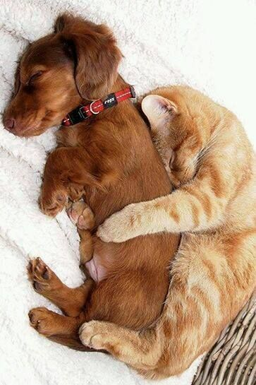 167111-cuddling-cat-and-dog