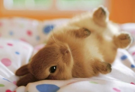 Charming kittens and puppies and bunnies and bunny on a bed teh cute cute puppies cute kittens amp other