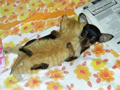 cat-doglove