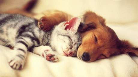 cute-cat-and-dog-sleep-wallpaper-620x349