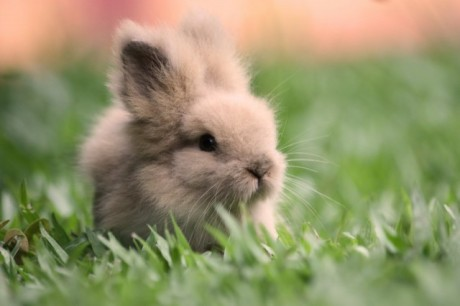 cute-bunny-pictures-003