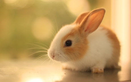 cute-bunny-pictures-2