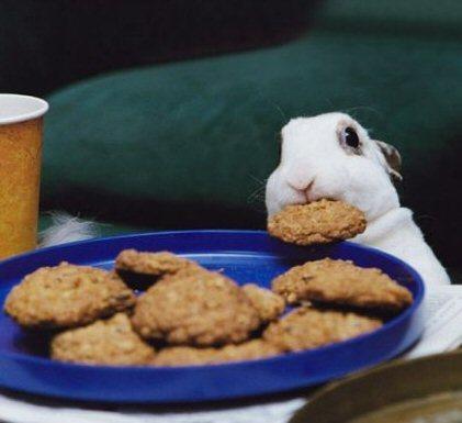 cute-bunny-random-9043035-421-385