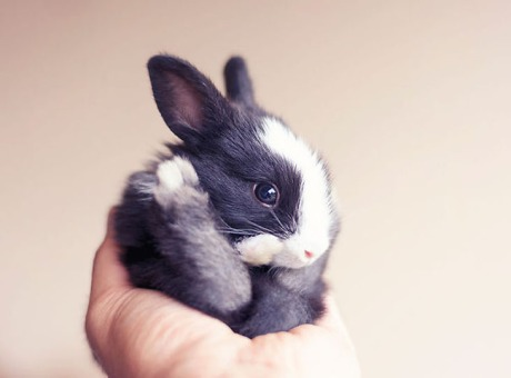 cutest-bunny-rabbits-06