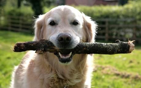 stick-dog_2603828k