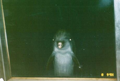 creepy-dolphin-glowing-eyes-window