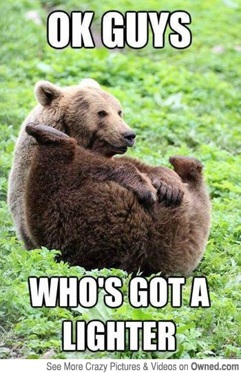 whos-got-a-lighter-funny-bear-meme