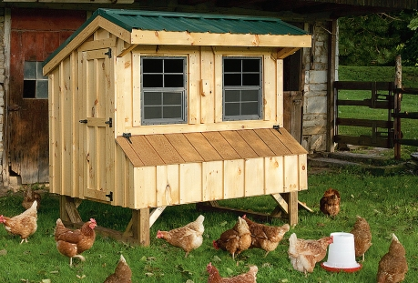 quaker-coop-with-chickens-bb
