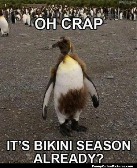 1511556543_735_most-funny-quotes-funny-animal-memes-best-113-funny-animal-memes