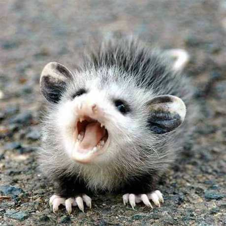 angry-baby-animals-1
