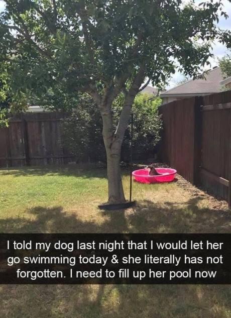 GoSwimmingToday