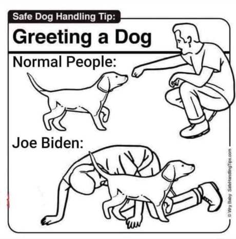 GreetingADog