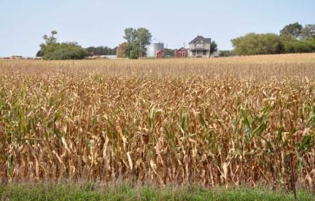 corn-sept