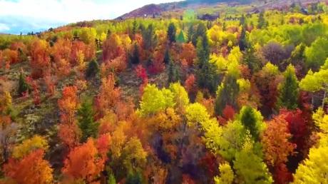 2484048_100317-wtvd-fall-drone-foliage-vid