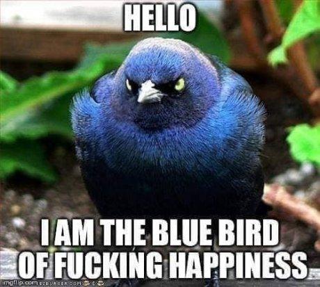 HelloIamTheBlueBirdOf