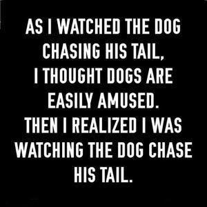 AsIWatchedTheDogChasingHisTail