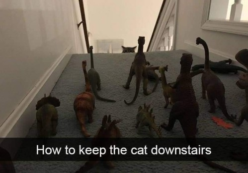 HowToKeepTheCatDownstairs