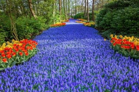 keukenhof-flower-garden-netherlands-7