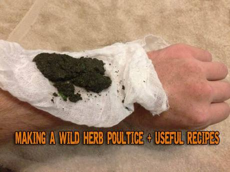 making-a-wild-herb-poultice-useful-recipes